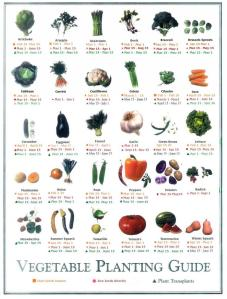 Vegi_Planting_001.60152855_std